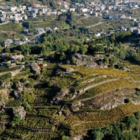 The Route of Terraced Vineyards: through the Valtellina' landscapes - Stage #3