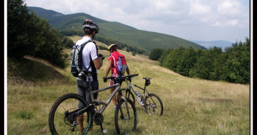 Discovering the Casentino Forests