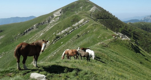 Ligurian Mountains Trail by Trekking - Stage #6