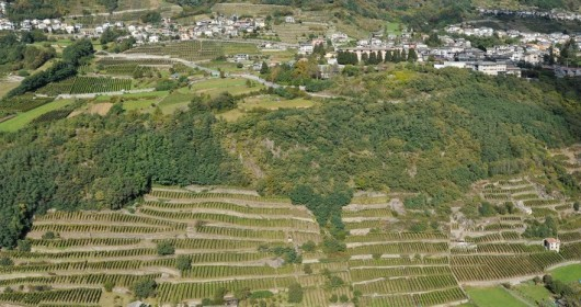 The Route of Terraced Vineyards: through the Valtellina' landscapes - Stage #2