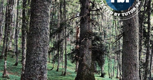 The Pollino Park: in the kingdom of the silver fir