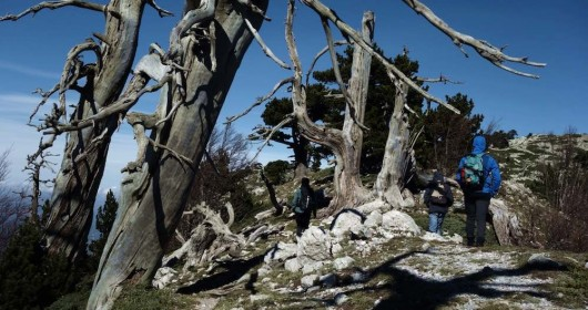 """The """"Garden of the Gods"""" in the Pollino National Park"""